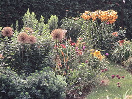 perennials, lilies