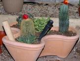 cactus potting