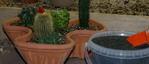 cactus, stone mulch