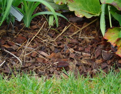 coconut mulch