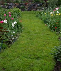 garden path, grass path
