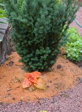 mulch, sawdust mulch