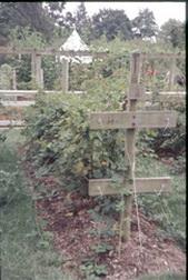 Raspberry trellis