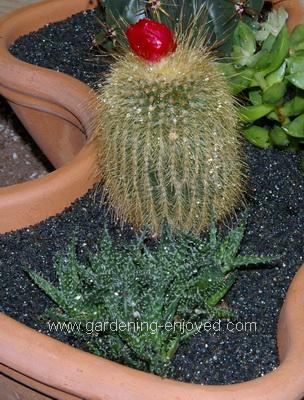 Cactus, succulents