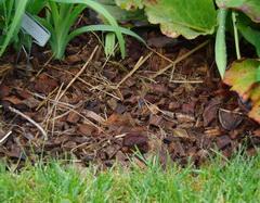 coconut mulch