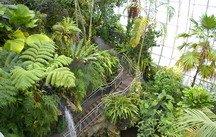 palms, Myriad Botanical Gardens