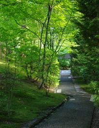 path, moss